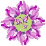 Blumenmuster, ein Kreis der purpurroten Iris Stockfoto