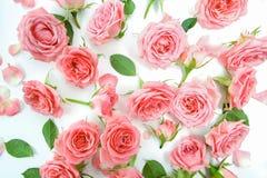 Blumenmuster gemacht von den rosa Rosen, grüne Blätter, Niederlassungen auf weißem Hintergrund Flache Lage, Draufsicht Gelbe Blum Stockbild