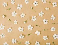 Blumenmuster gemacht von den weißen Frühlingsblumen und -knospen auf Hintergrund des braunen Papiers Flache Lage stockfoto