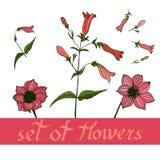 Blumenmuster mit flowerswith Elementen des Designs Auch im corel abgehobenen Betrag vektor abbildung