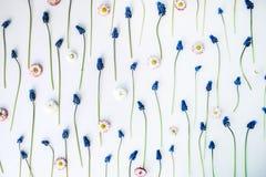 Blumenmuster-Tapete Muscari, Kamille Stockfotos