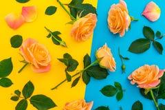 Blumenmuster von orange Rosen mit Blättern auf gelbem und blauem Hintergrund Flache Lage, Draufsicht stockfotos
