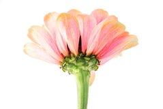 Blumenmusterdekoration Lizenzfreie Stockfotografie