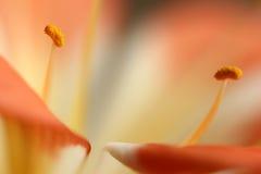 Blumennahaufnahme lizenzfreie stockfotografie