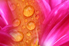 Blumennahaufnahme stockbilder