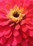 Blumennahaufnahme Lizenzfreie Stockfotos