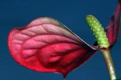 Blumennahaufnahme Stockfotografie