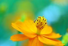 Blumennahaufnahme Lizenzfreies Stockbild