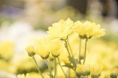 Blumennatur mit Kopienraum Lizenzfreie Stockbilder