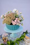 Blumennoch Lebensdauer Stockfotografie