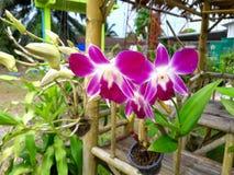 Blumenorchidee Stockfotos