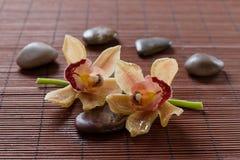 Blumenorchidee- und -Zensteine Stockfoto