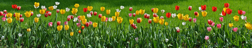 Blumenpanorama Lizenzfreies Stockbild