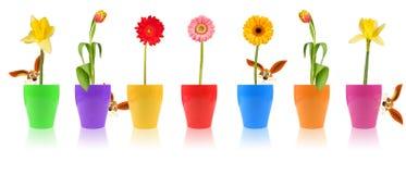Blumenparade Lizenzfreie Stockbilder
