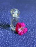 Blumenparfüm auf purpurrotem Hintergrund Lizenzfreie Stockbilder