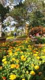 Blumenpark Stockbild
