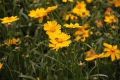Blumenpark Stockfotos