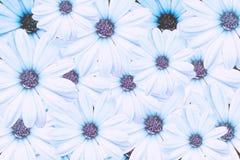 Blumenpastellhintergrund-Konzeptdesign Lizenzfreie Stockfotos