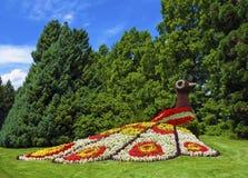 Blumenpfau in einem Garten Lizenzfreie Stockfotografie