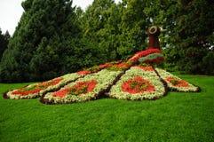 Blumenpfau Mainau II Lizenzfreies Stockbild