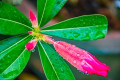 Blumenphotographienahaufnahme lizenzfreie stockfotografie