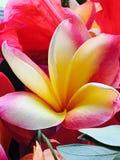 Blumenporträt Lizenzfreie Stockfotografie