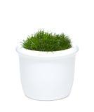 Blumenpotentiometer mit Gras stockbild