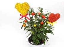 Blumenpotentiometer und -innere Lizenzfreie Stockfotografie