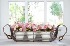 Blumenpotentiometer vor einem Fenster. Stockbild
