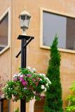 Blumenpotentiometerhängen Stockbilder