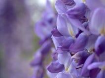 Blumenpurpur Stockbild