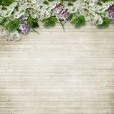 Blumenrabatte der Flieder- und Vogelkirsche auf hölzernem Hintergrund Stockbild