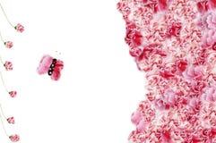 Blumenrahmen lizenzfreies stockfoto