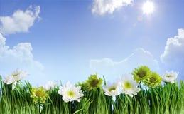 Blumenrahmen des grünen Grases Lizenzfreies Stockfoto