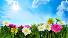 Blumenrahmen des grünen Grases Stockfotografie