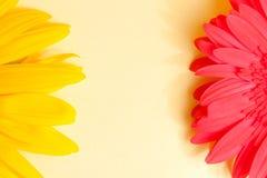 Blumenrahmen mit Raum für Text Stockbild