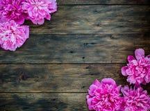 Blumenrahmen mit rosa Pfingstrosen blüht auf hölzernem Hintergrund Selektiver Fokus, Platz für Text, Draufsicht Lizenzfreies Stockfoto