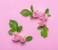 Blumenrahmen mit rosa Rosen auf einem rosa Hintergrund Bringt Blumenrabatte in Verlegenheit Stockfotos