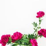 Blumenrahmen mit roten Pfingstrosenblumen und -blättern auf weißem Hintergrund Flache Lage, Draufsicht Muster gemacht von den Blu Stockfoto