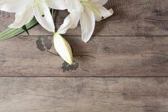 Blumenrahmen mit weißen Lilien auf hölzernem Hintergrund Angeredete vermarktende Fotografie Kopieren Sie Platz Hochzeit, Gutschei Lizenzfreies Stockbild