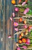 Blumenrahmen - Trockenblumen und Anlagen, schönes Weinlesedesign Stockbilder