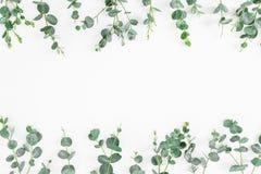 Blumenrahmen von den Eukalyptusblättern lokalisiert auf weißem Hintergrund Flache Lage, Draufsicht Stockbild