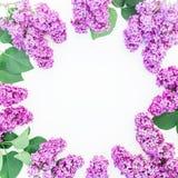 Blumenrahmen von purpurroten lila Niederlassungen und von Blättern auf weißem Hintergrund Flache Lage, Draufsicht Sommermuster Stockbild