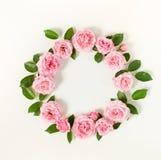 Blumenrahmenkranz von blassem - rosa Rosenblumenknospen und -blätter auf weißem Hintergrund lizenzfreie stockfotos