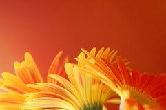 Blumenrand Lizenzfreies Stockfoto