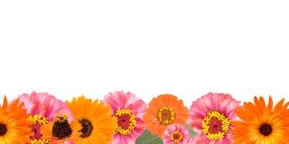 Blumenrand Lizenzfreie Stockfotos