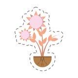 Blumenrecht wachsendes der Sonnenblume Stockfotos