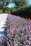 Blumenreihe Stockfotografie