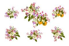 Blumenretro- Weinlesehintergrund der arabis- und Orangenblumen Stockbild