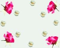 Blumenrhapsodie mit Rosen Lizenzfreie Stockfotos